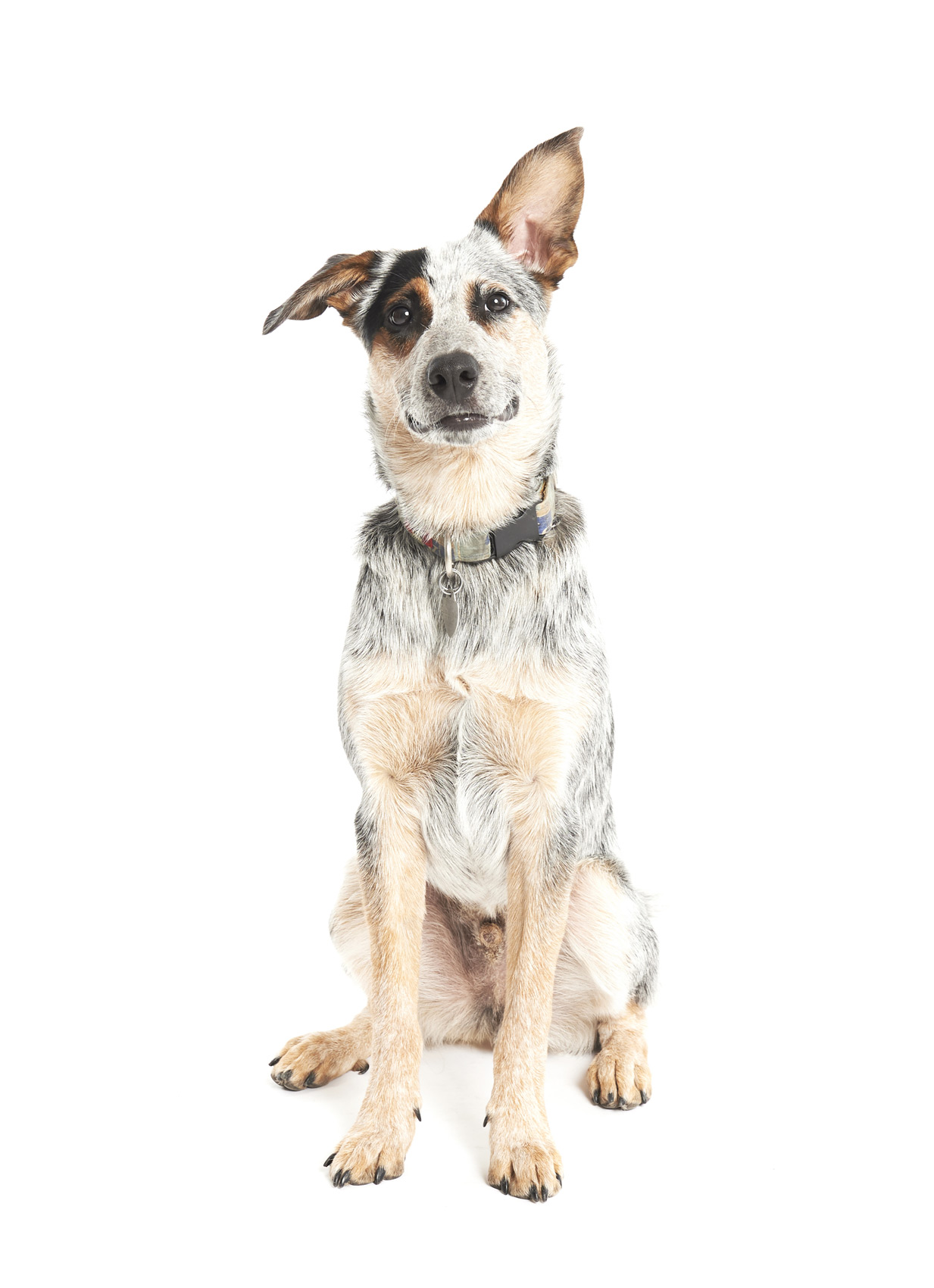 mixed-breed-rescue-dog.JPG